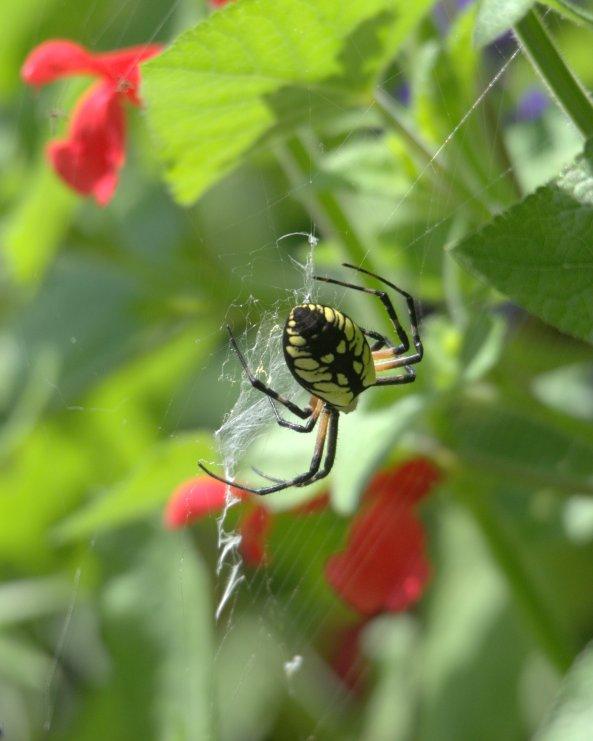 spider in webDSC_2265